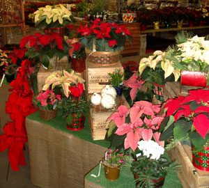 Gro Moore Farms Craft Show